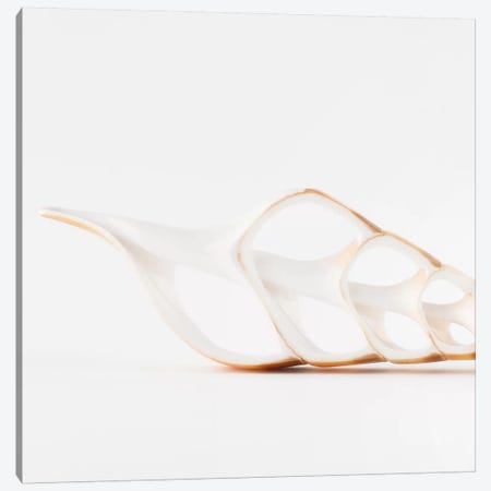 Beautiful Cut Tibia Shell 3-Piece Canvas #PHD990} by Philippe Hugonnard Canvas Wall Art