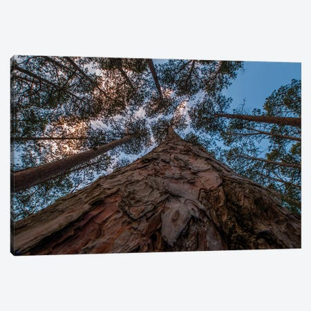 USA, Minnesota, Itasca State Park Canvas Print #PHK13} by Peter Hawkins Canvas Art