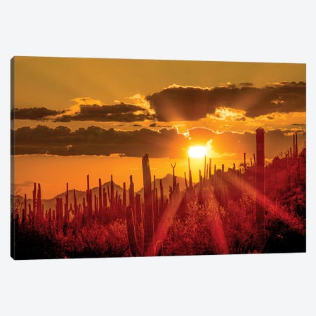 USA, Arizona, Tucson, Saguaro National Park I Canvas Print #PHK5} by Peter Hawkins Canvas Wall Art