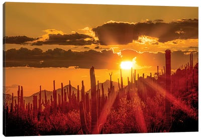 USA, Arizona, Tucson, Saguaro National Park I Canvas Art Print