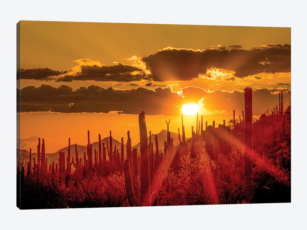 USA, Arizona, Tucson, Saguaro National Park I by Peter Hawkins 1-piece Canvas Artwork