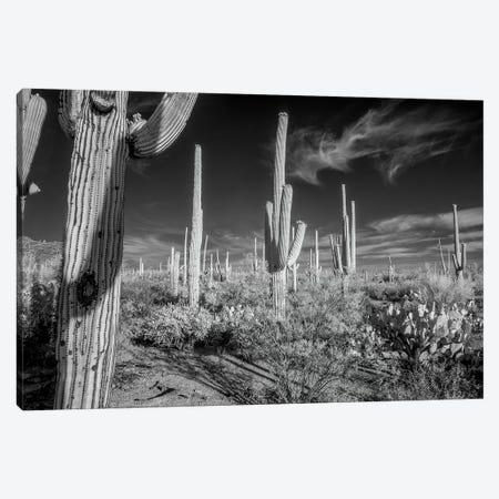 USA, Arizona, Tucson, Saguaro National Park II 3-Piece Canvas #PHK6} by Peter Hawkins Canvas Art
