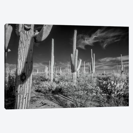 USA, Arizona, Tucson, Saguaro National Park II Canvas Print #PHK6} by Peter Hawkins Canvas Art