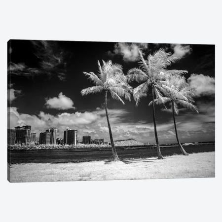 USA, Hawaii, Oahu, Honolulu, Palm trees on the beach. Canvas Print #PHK8} by Peter Hawkins Canvas Print