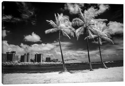 USA, Hawaii, Oahu, Honolulu, Palm trees on the beach. Canvas Art Print