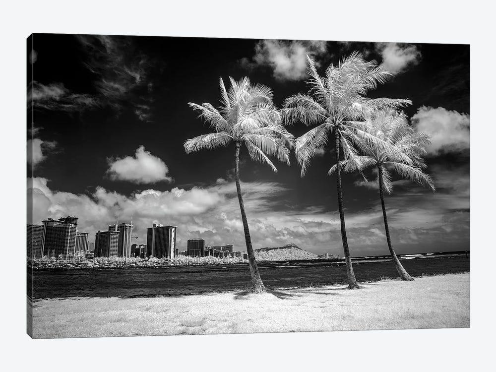 USA, Hawaii, Oahu, Honolulu, Palm trees on the beach. by Peter Hawkins 1-piece Canvas Art Print