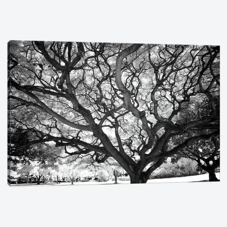 USA, Hawaii, Oahu, Honolulu, Twisted tree limbs. Canvas Print #PHK9} by Peter Hawkins Canvas Print