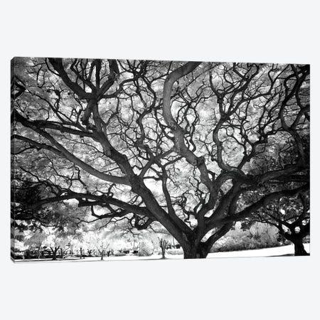 USA, Hawaii, Oahu, Honolulu, Twisted tree limbs. Canvas Print #PHK9} by Peter Hawkins Canvas Print
