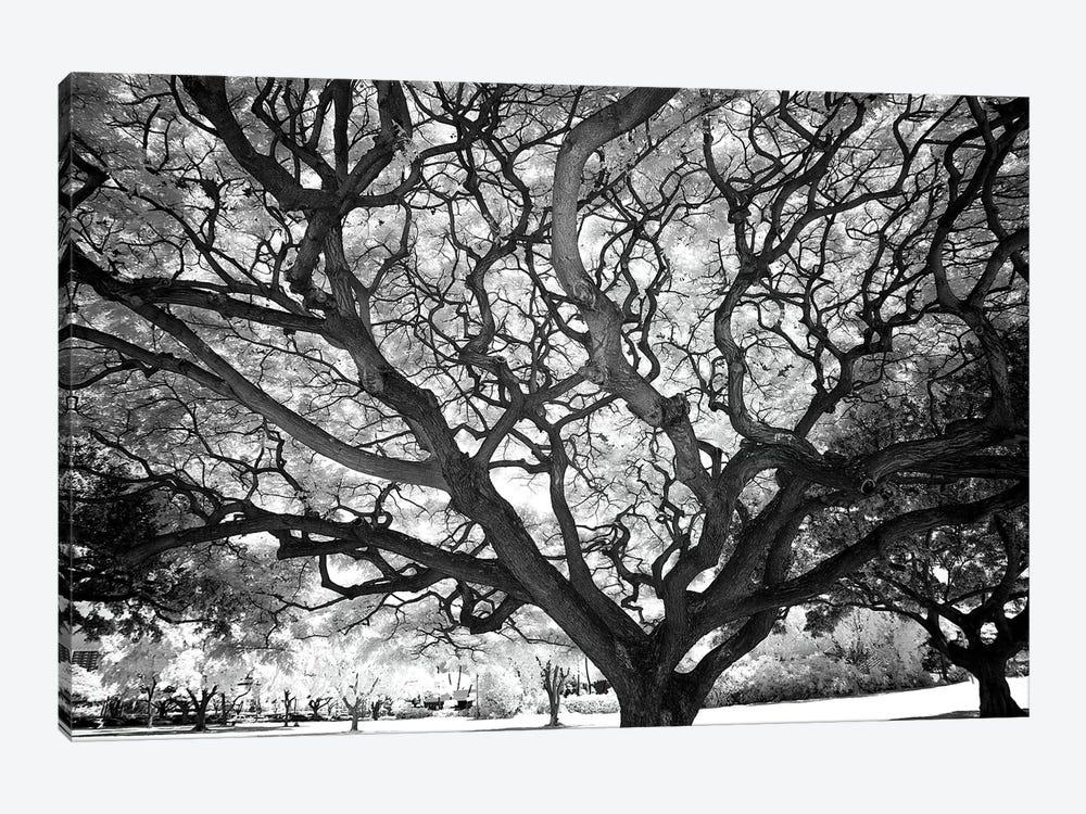 USA, Hawaii, Oahu, Honolulu, Twisted tree limbs. by Peter Hawkins 1-piece Canvas Art