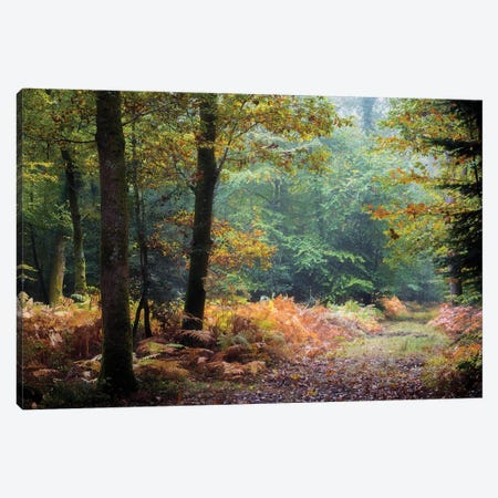 Automne Forest Leaves Canvas Print #PHM11} by Philippe Manguin Canvas Artwork