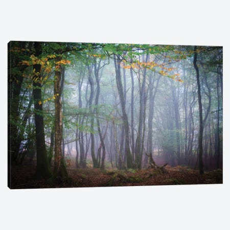 Autumn Foggy Forest Scene Canvas Print #PHM12} by Philippe Manguin Canvas Wall Art