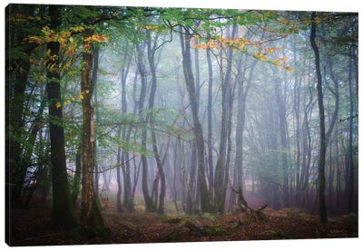 Autumn Foggy Forest Scene Canvas Art Print