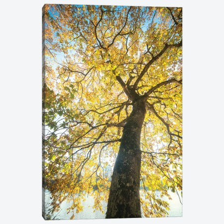 Lighting Tree Canvas Print #PHM130} by Philippe Manguin Canvas Art