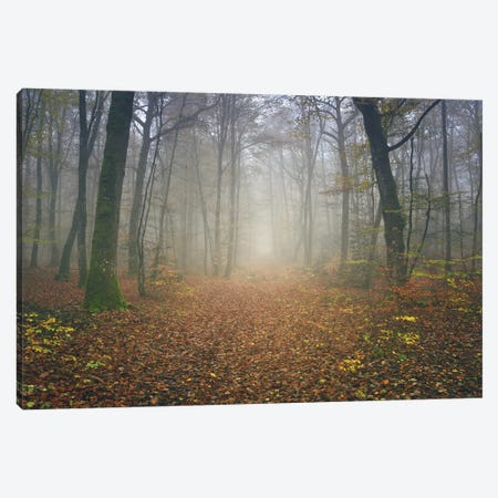 Autumn Forest Canvas Print #PHM13} by Philippe Manguin Canvas Wall Art