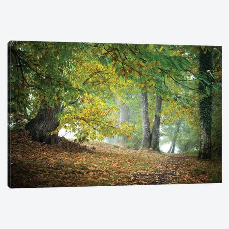 Morning Walk Canvas Print #PHM150} by Philippe Manguin Canvas Artwork
