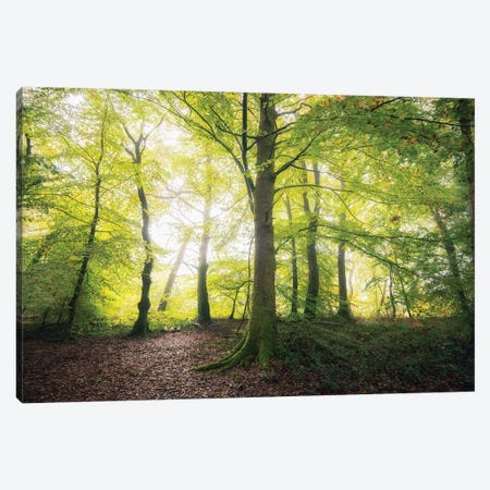 Natural Light Canvas Print #PHM152} by Philippe Manguin Canvas Wall Art