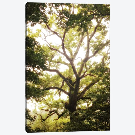 Natural Morning Light Canvas Print #PHM153} by Philippe Manguin Canvas Wall Art