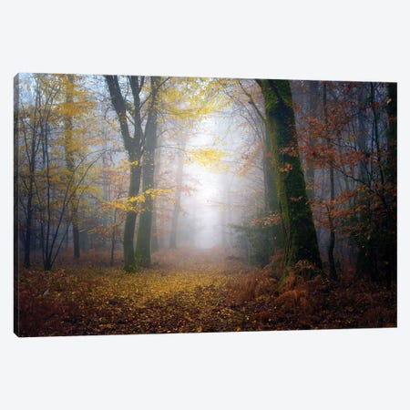 Autumn Walk In The Forest Canvas Print #PHM15} by Philippe Manguin Canvas Print