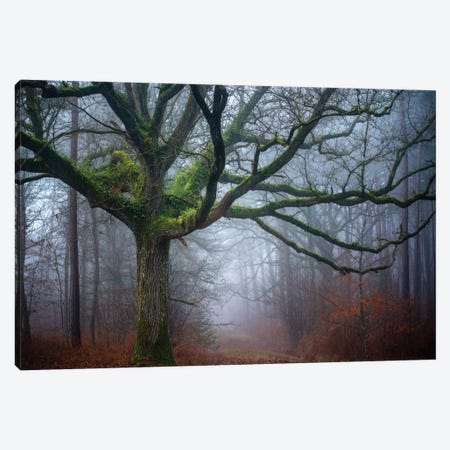 Old Oak Tree Canvas Print #PHM160} by Philippe Manguin Art Print