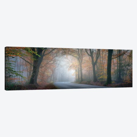Panoramic Forest Canvas Print #PHM163} by Philippe Manguin Canvas Art Print
