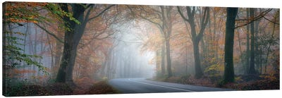 Panoramic Forest Canvas Art Print