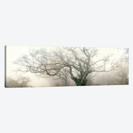 Panoramic Octopus Ghost Oak Canvas Print #PHM164} by Philippe Manguin Canvas Art