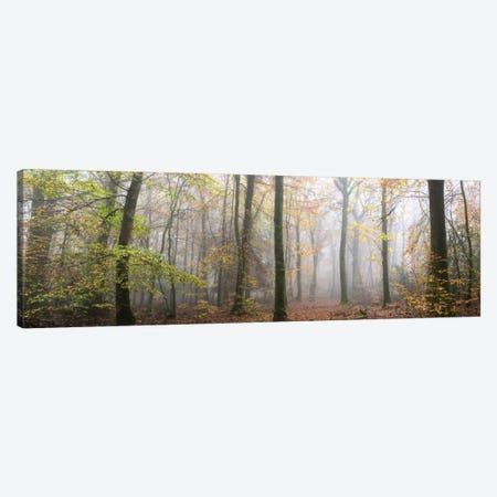 Panoramic Walk In The Forest Canvas Print #PHM167} by Philippe Manguin Canvas Art