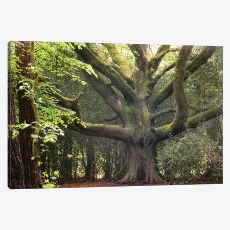 Big Beech Tree In Broceliande Canvas Print #PHM16} by Philippe Manguin Canvas Print