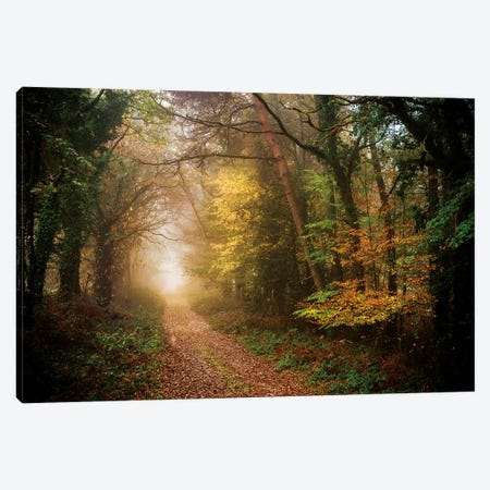 Path In Autumn Forest Canvas Print #PHM180} by Philippe Manguin Art Print
