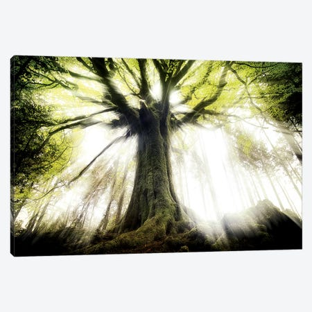Ponthus Beech Canvas Print #PHM181} by Philippe Manguin Canvas Print