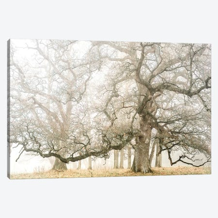 The Ghost Oaks Canvas Print #PHM199} by Philippe Manguin Canvas Wall Art