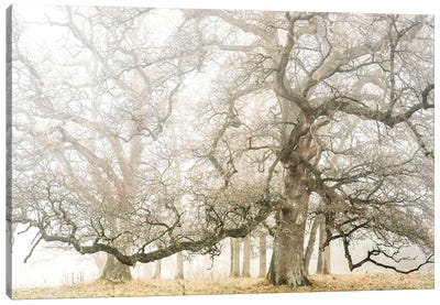 The Ghost Oaks Canvas Art Print