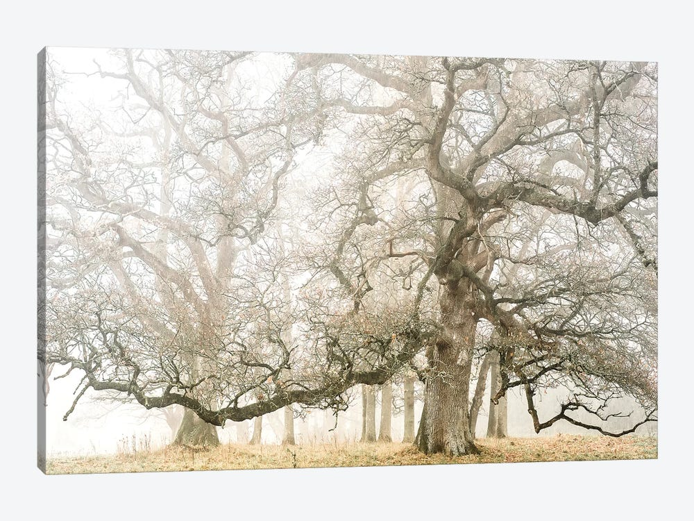 The Ghost Oaks by Philippe Manguin 1-piece Canvas Art