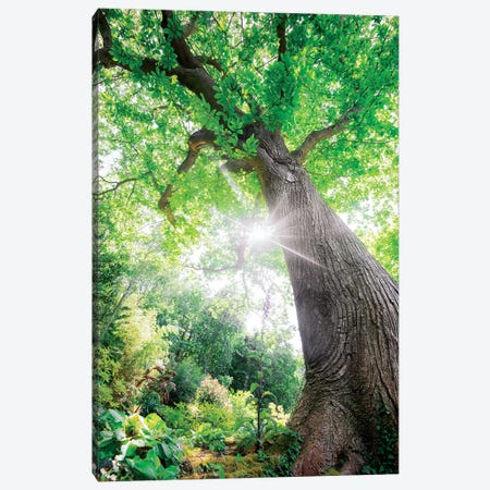 The Lighting Green Old Tree - L'Illumination Canvas Print #PHM204} by Philippe Manguin Canvas Print