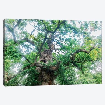 The Old Oak Canvas Print #PHM208} by Philippe Manguin Canvas Artwork