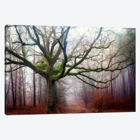 The Old Octopus Oak Tree Canvas Print #PHM209} by Philippe Manguin Canvas Wall Art