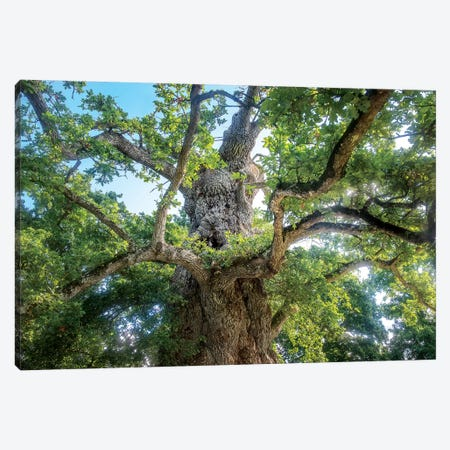 The Old Tree Oak Canvas Print #PHM212} by Philippe Manguin Art Print