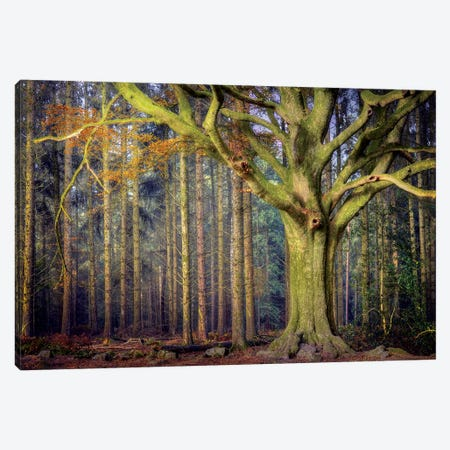 The Ponthus Beech Canvas Print #PHM214} by Philippe Manguin Canvas Art