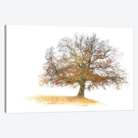 The Tree Canvas Print #PHM218} by Philippe Manguin Canvas Art Print