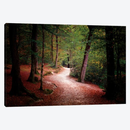 Walk Deep In The Forest Canvas Print #PHM231} by Philippe Manguin Art Print