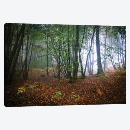 Broceliande Forest Canvas Print #PHM26} by Philippe Manguin Canvas Artwork