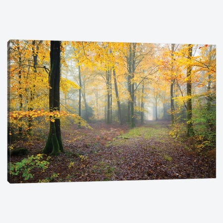 Broceliande Forest Fall Canvas Print #PHM27} by Philippe Manguin Canvas Artwork