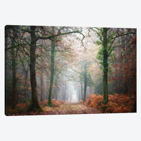 A Walk In The Forest At Fall Canvas Print #PHM2} by Philippe Manguin Canvas Print