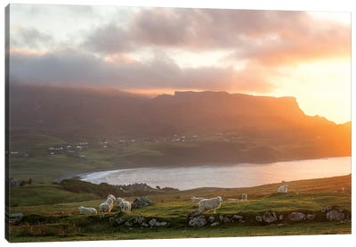 Sunset On Skye Island Grasslands, Scotland Canvas Art Print