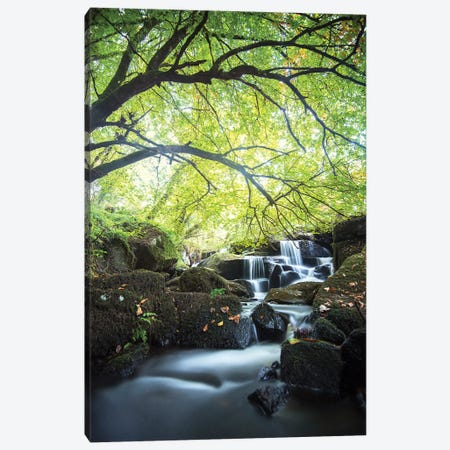 Forest Waterfall In Brittany Canvas Print #PHM360} by Philippe Manguin Canvas Print