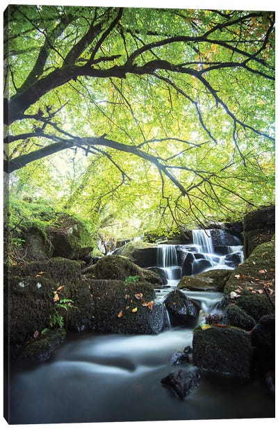 Forest Waterfall In Brittany Canvas Art Print