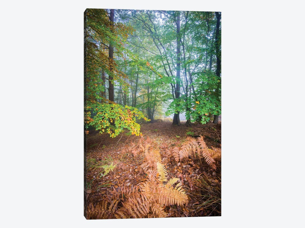 Forest Fall In France by Philippe Manguin 1-piece Art Print