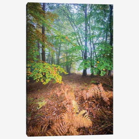 Forest Fall In France Canvas Print #PHM368} by Philippe Manguin Canvas Print