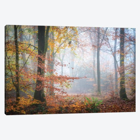 Forest Fall Canvas Print #PHM369} by Philippe Manguin Canvas Print