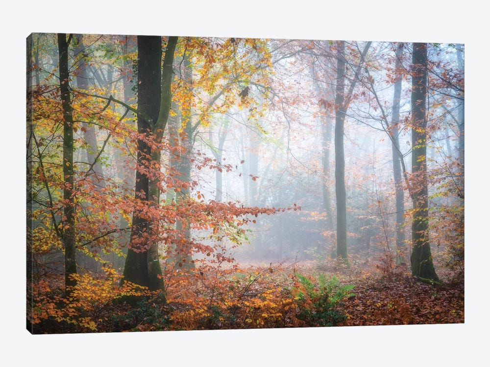 Forest Fall by Philippe Manguin 1-piece Canvas Wall Art